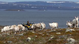 Sami reindeer herder Nils Mathis Sara, 60, drives his ATV as he follows a herd of reindeer on the Finnmark Plateau, Norway