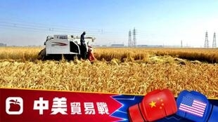 美中农产品关税配额争端。