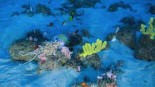 Imágen del arrecife coralino del Amazonas captada desde un barco de Greenpeace. 28 de enero de 2017.