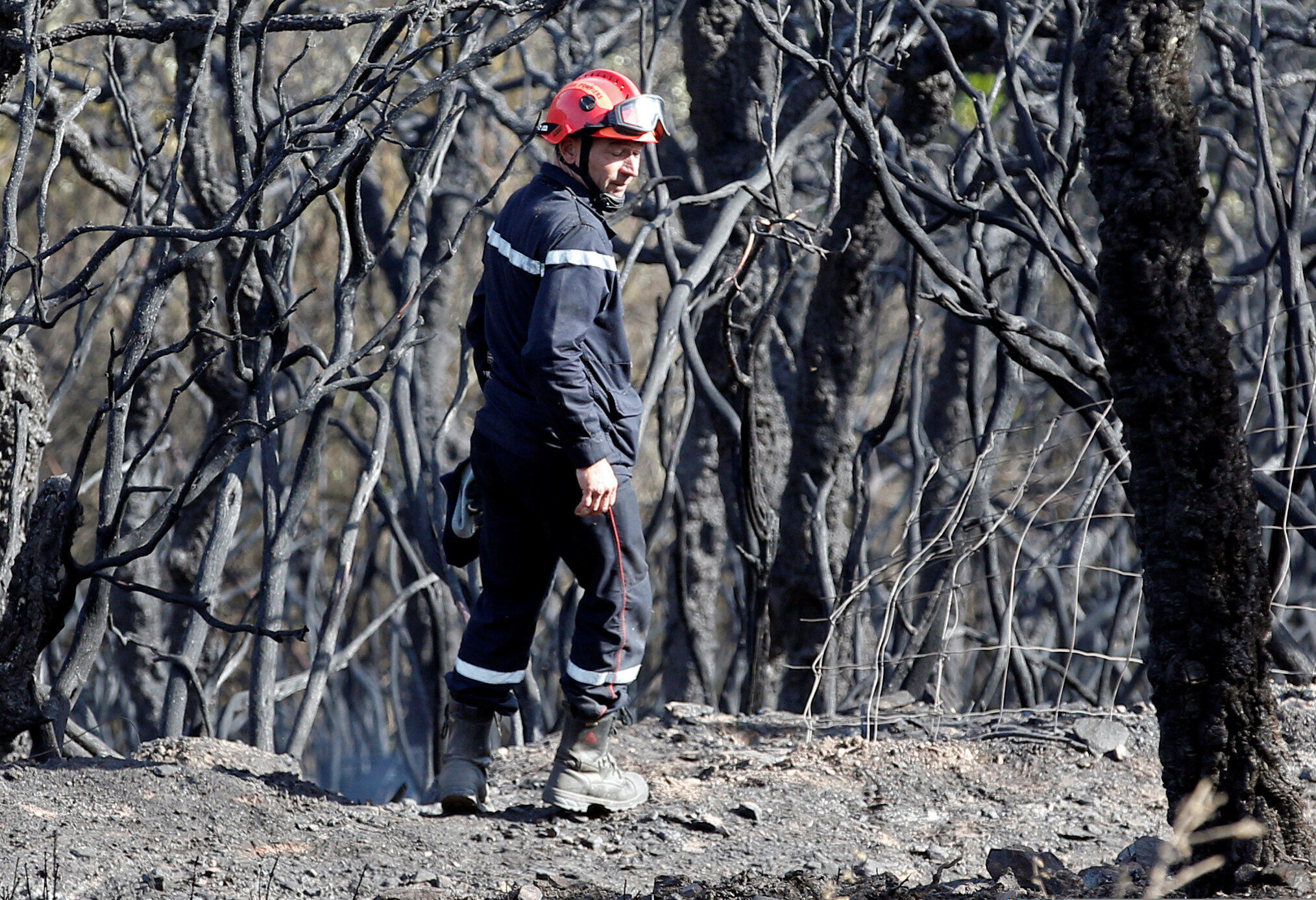 A firefighter walks past burned trees at Bormes-les-Mimosas