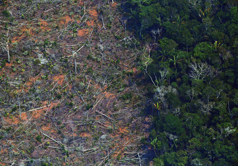 Grande parte do deflorestamento amazônico vem do agronegócio.