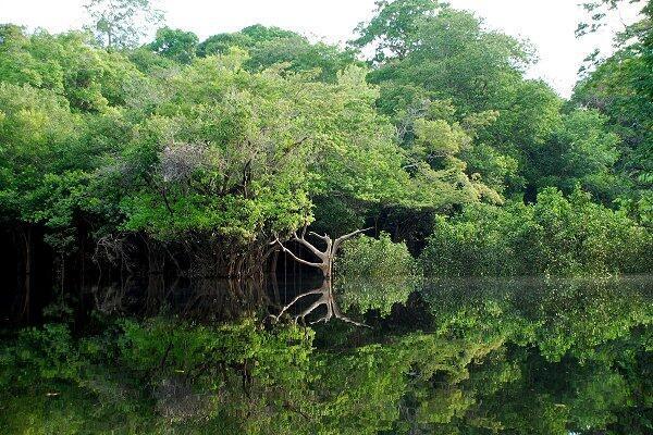 Rừng Amazon có hệ đa dạng sinh thái « độc nhất vô nhị » với ¼ giống loài trên Trái đất - gần 40.000 loài cây, 2,5 triệu loài côn trùng, 3.000 loài cá nước ngọt, 1.500 loài chim, 500 loài động vật có vú, 550 loài bò sát ...