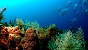 Se conoce sólo una pequeña parte de los fondos marinos.