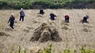 Chính quyền Bắc Triều Tiên kiểm soát chặt các hình ảnh về quốc gia này. Trong ảnh, nông dân Bắc Triều Tiên làm việc trên đồng ruộng gần Bình Nhưỡng.