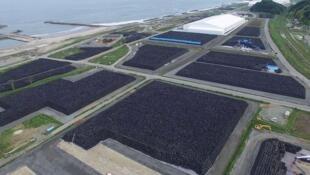 Milhares de sacos com terra contaminada, em Fukushima