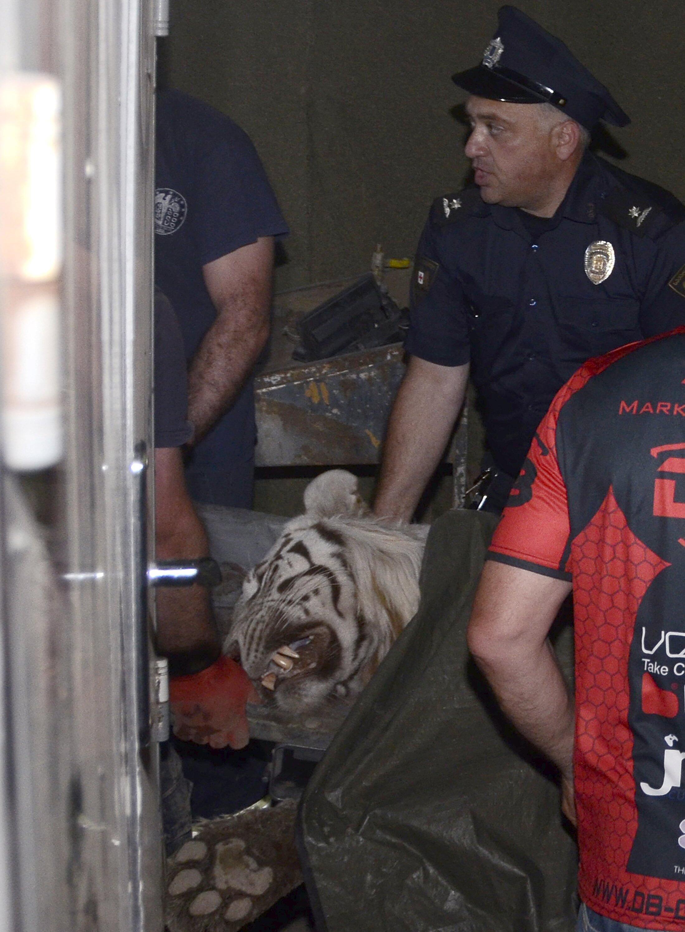 Animais do zoológico de Tbilisi morreram em decorrência da inundação ou foram mortos pela polícia.