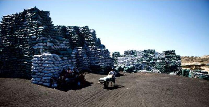 تولید میلیونها کیسه زغال چوب در سال، جنگلهای سومالی را به خطر انداخته است