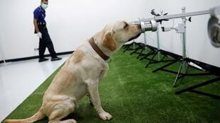 CORONAVIRUS-SNIFFER-DOGS-chiens