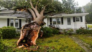 Uma árvore arrancada durante passagem do furacão Florence na Carolina do Norte.