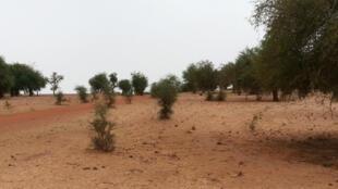 Région du Dallol, Niger.