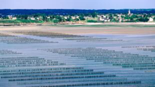 Parcs à huitres dans la Baie de l'Arguenon, en Bretagne.