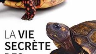 """""""La vie secrète des tortues"""" de Bernard Devaux, paru chez Delachaux et Niestlé"""