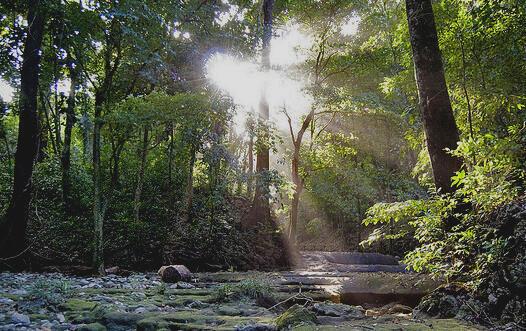 El narcotráfico ha tomado los bosques de la región como nueva ruta para el transporte de drogas.