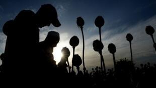 L'augmentation du nombre de drogués en Iran serait liée à la hausse de la production d'opium en Afghanistan.