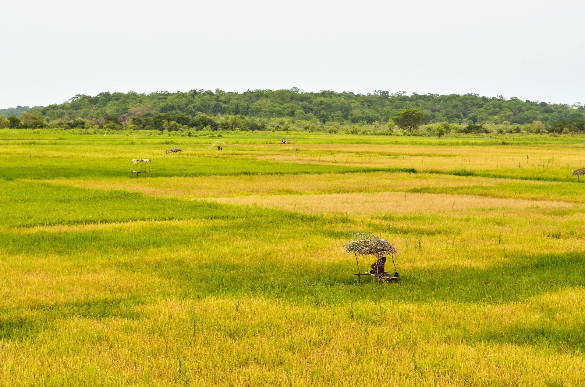 A field in rural Guinea-Bissau