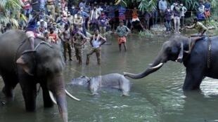 Des officiers de police et des habitants en train de sortir l'éléphante tué par un fruit piégé, en Inde le 27 mai 2020