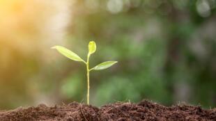 Une équipe de scientifiques européens a mis au point un appareil qui imite le phénomène de la photosynthèse naturelle des plantes.
