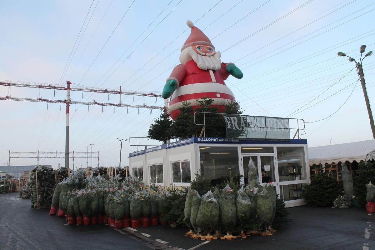 À Rungis comme ailleurs, la moitié des ventes de sapins de Noël se fait avant le 9 décembre.