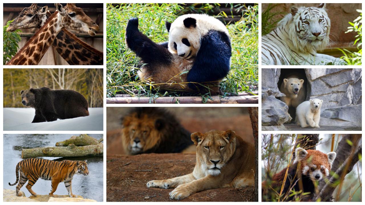 De acordo com relatórios da ONU, 1 milhão de plantas e animais estão em risco de extinção por causas antropogênicas — ou seja, devido à ação do homem.