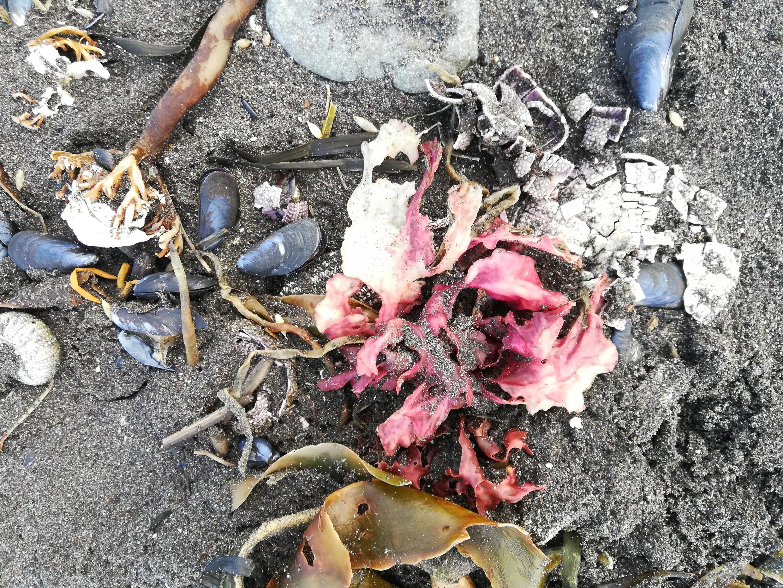 Depuis plusieurs jours, des habitants de la péninsule sauvage du Kamtchatka ont constaté la présence d'impressionnantes quantités d'animaux marins morts sur les plages de l'océan Pacifique.