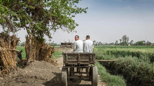 Men in a donkey-led cart drive by farm fields