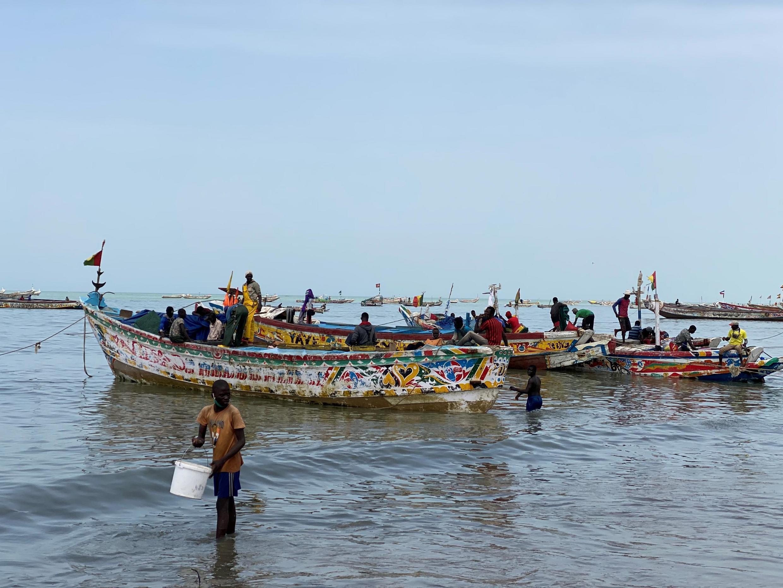Devant le quai de pêche de Mbour, des dizaines de pirogues débarquent toutes les heures le poisson fraîchement pêché. Une pêche moins abondante car devant être effectuée le jour, en dehors du couvre-feu lié au coronavirus.