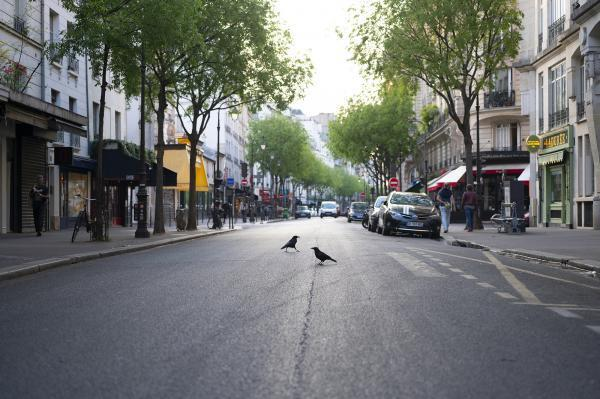 A French climate panel has urged the government to align its post-coronavirus economic recovery plans with its emission reduction targets in order to avoid health and environmental disasters in the future.