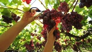 La iniciativa busca una mayor transparencia en un contexto caracterizado por una opaca y desequilibrada relación entre la oferta y la demanda de vinos y mostos.