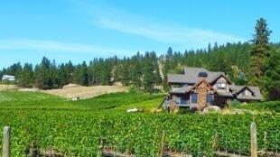 Des vignes dans la vallée de l'Okanagan, en Colombie-Britannique.