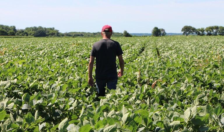 """Một trang trại ở Illinois, Hoa Kỳ, chuyên trồng đậu tương, nông phẩm bị ảnh hưởng nặng nề bởi """"chiến tranh thương mại. Ảnh chụp ngày 06/07/2018"""