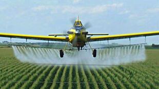 Una avioneta fumigando cultivos de maíz transgénico
