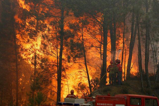 Portugal em 2017 já arderam 170 mil hectares de florestas