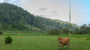 Dans le parc du Corcovado au Costa-Rica (Image d'illustration).