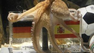 A Espanha quer expatriar o polvo-vidente, que vive em um aquário na Alemanha