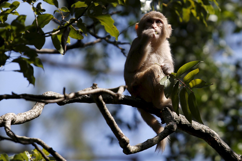 Le rapport du WWF appelle notamment à renforcer la conservation des animaux sauvages en mettant les communautés locales au cœur de la protection de la nature.