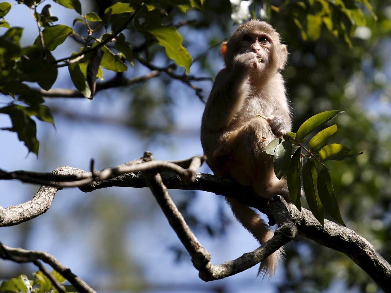 Mơ thấy khỉ và những con số may mắn nên chọn