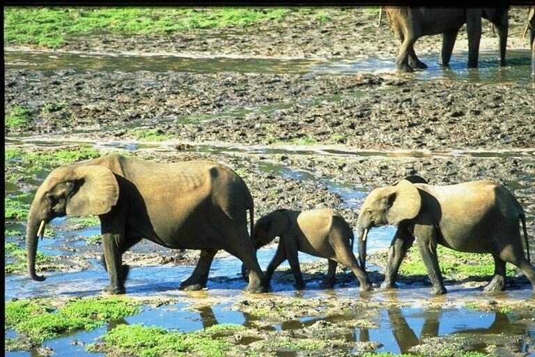 De nombreux vacanciers passionnés d'animaux optent pour un safari.