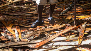 Copeaux de bois précieux laissés par des bûcherons dans la forêt de Vohibola, près du village de Manambato à Madagascar, le 24 mars 2019.