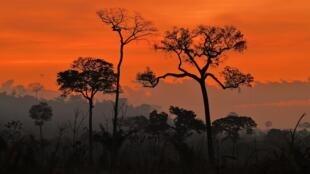 La forêt amazonienne en proie aux flammes. Ici, au sud de Novo Progresso dans l'État de Para, au Brésil, le 15 août 2020.