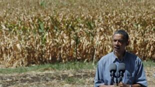 Diante de uma plantação de milho danificada pelo calor, presidente americano, Barack Obama, prometeu ajuda para os agricultores afetados pela seca.