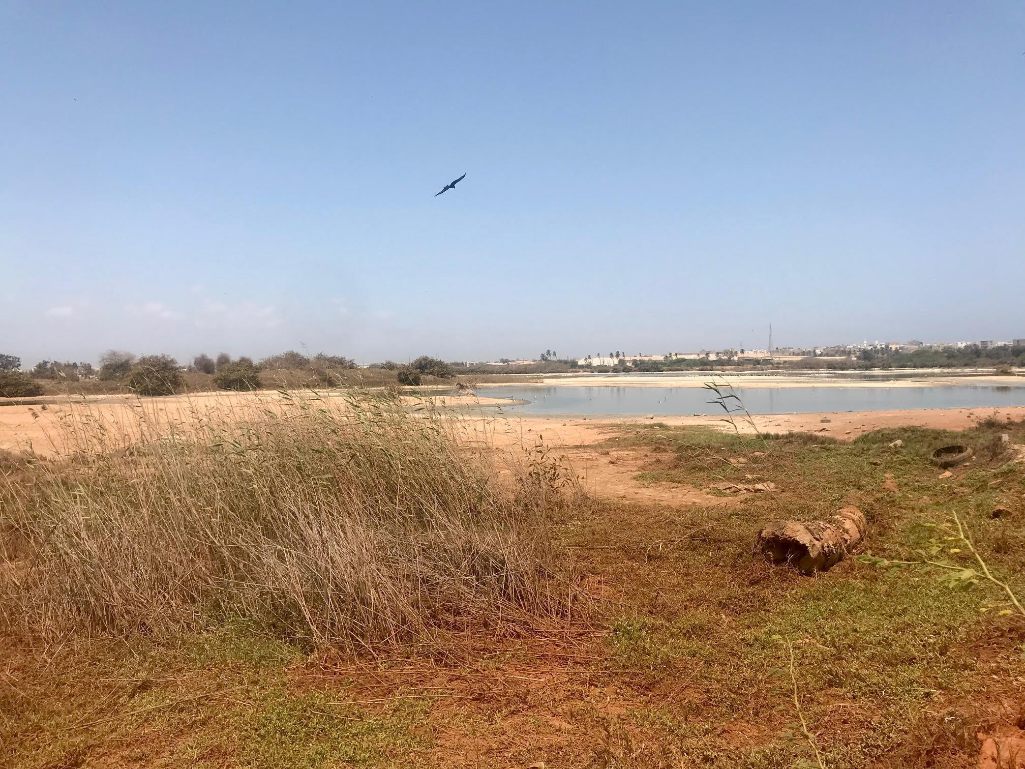 A degraded wetlands at a former golf course near Dakar was recently granted protected status as an urban nature reserve where more than 230 bird species stop by every year.