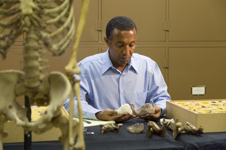 Yohannes Haile-Selassie, du Musée d'histoire naturelle de Cleveland, est à l'origine de la découverte de ce nouvel australopithèque.