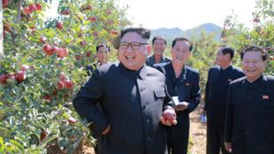 圖為朝鮮領導人金正恩參觀南部一家水果農場