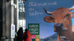 Bella est la nouvelle égérie du 51ème Salon de l'agriculture. Elle pèse 600 Kg, mesure 1,30m au garrot, et a été choisie pour l'affiche officielle du Salon.