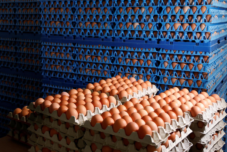 دامنۀ تخممرغهای آلوده به «فیپرونیل»، علاوه بر ١٦ کشور اروپائی به آسیا نیز گسترش یافت