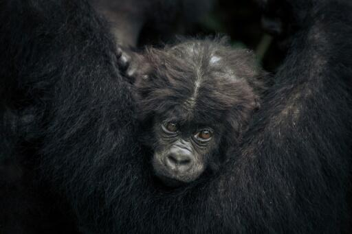 The United Nations biodiversity panel IPBES last year warned that up to one million species face the risk of extinction.