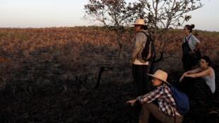 Des chercheurs et un pompier visitent une zone de l'Amazonie détruite par les incendies, à Santarém le 19 septembre 2019.
