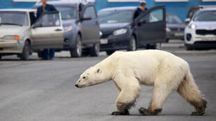 Climate change is putting many species and ecosystems under severe threat