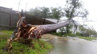 Uma árvore tombada anuncia chegada do furacão Isaac a Nova Orleans, em 29 de agosto de 2012