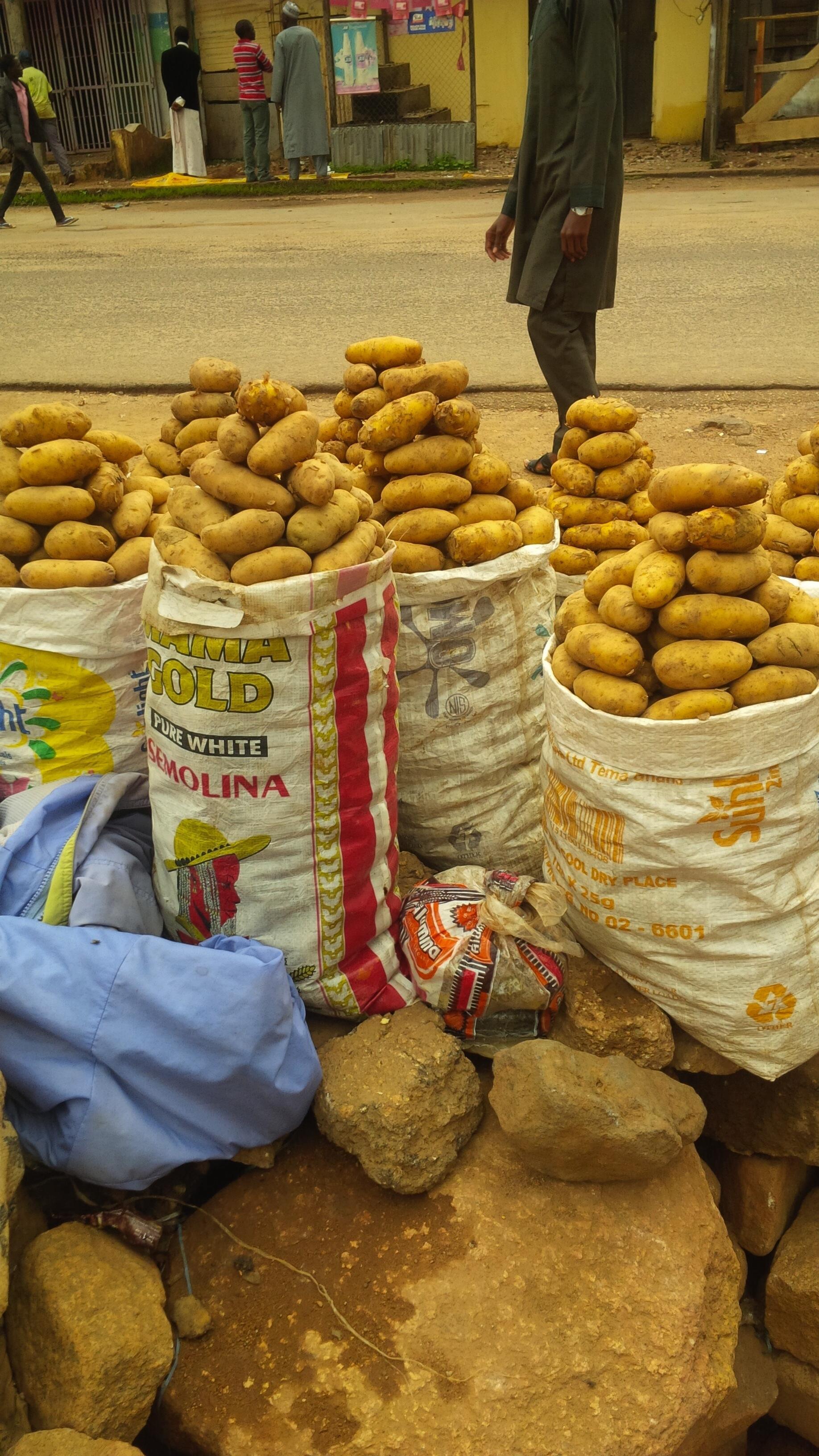 Potato farming